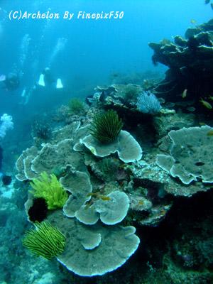 サンゴが元気!