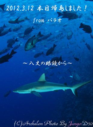 サメと遊んできました