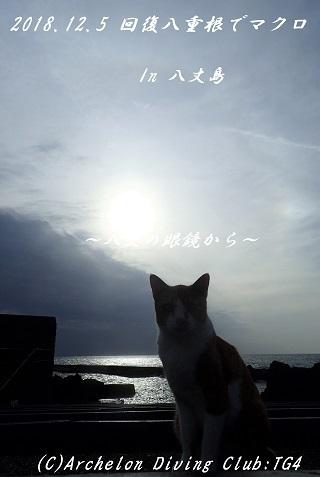 181205-soya02.jpg