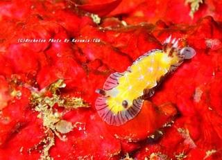 200208-k-03shirosuji.jpg