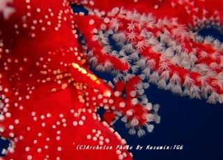 200209-k-02isobana.jpg