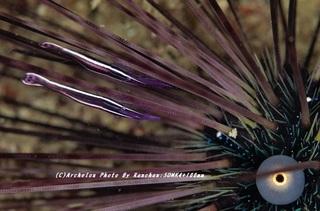 201121-ra-02gangaze.jpg