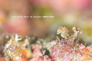 201122-ra-04pig.jpg