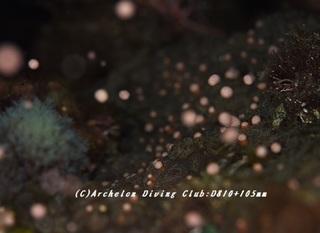 coral180802-02.jpg