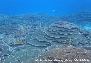coral181204.jpg