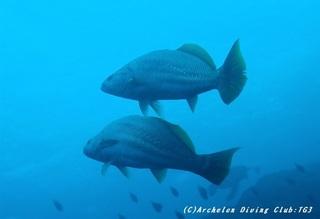 fish191230-04.jpg
