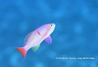 kashiwa200609-01.jpg