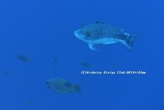 kitusnebera210128-na-03.jpg