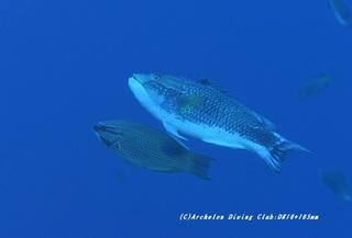 kitusnebera210128-na-04.jpg
