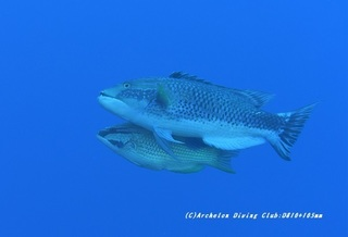 kitusnebera210128-na-06.jpg