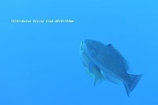 kitusnebera210128-na-10.jpg