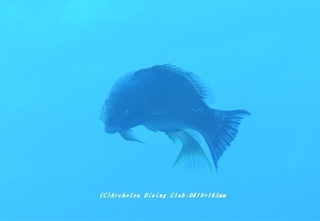 kitusnebera210128-na-11.jpg