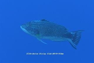 kitusnebera210128-na.jpg