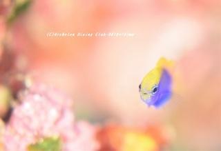 senaki201220.jpg