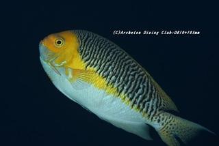 tosayakko201202.jpg