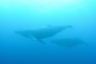 whale-151213-01-s-1000.jpg
