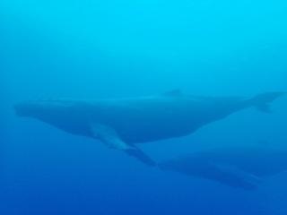 whale-151213-tg-01-600.jpg