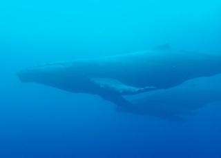 whale-151213-tg-02-600.jpg
