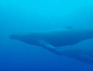 whale-151213-tg-05-600.jpg