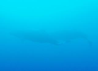 whale-151213-tg-09-600.jpg