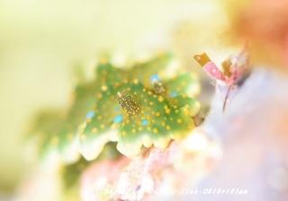 yosenami190718-02.jpg